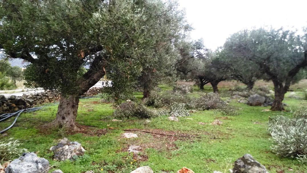 Land for sale in Akrotiri Crete
