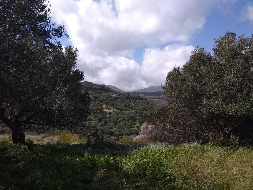 Pure Cretan Nature