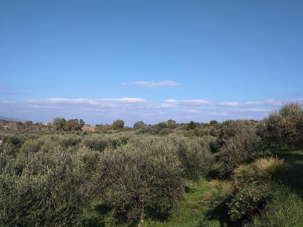 Land in Chryssi Akti