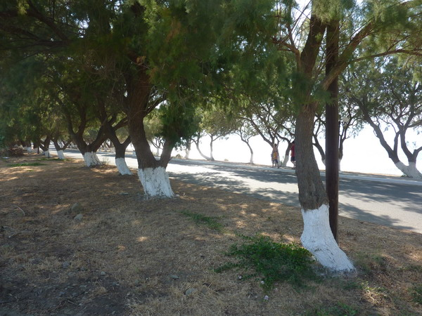 Magnificent Sea front land in Tavronitis