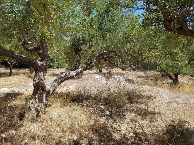 Land for sale in Chania Crete with views and olive trees
