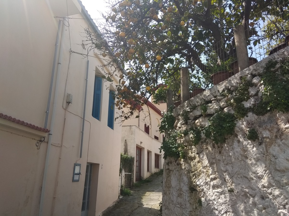 Stone house for sale in Chania external tree