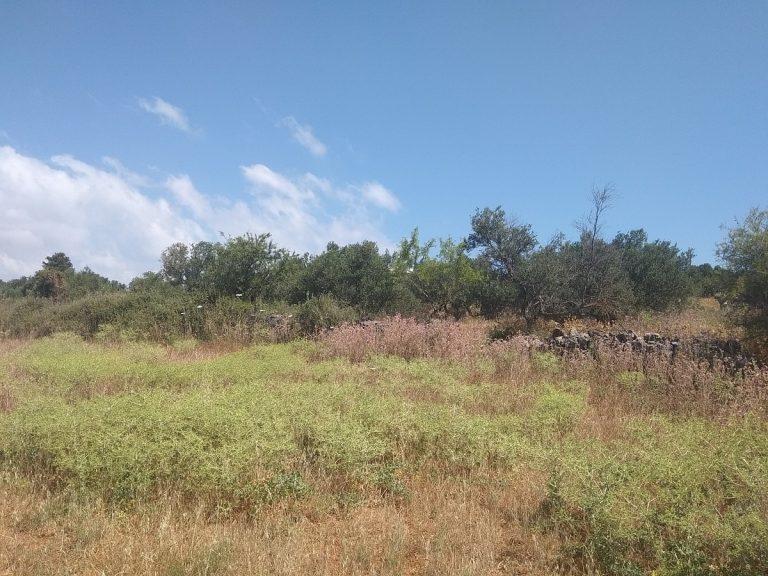 Plot of land in Apokoronas Chania Crete for sale cretan nature