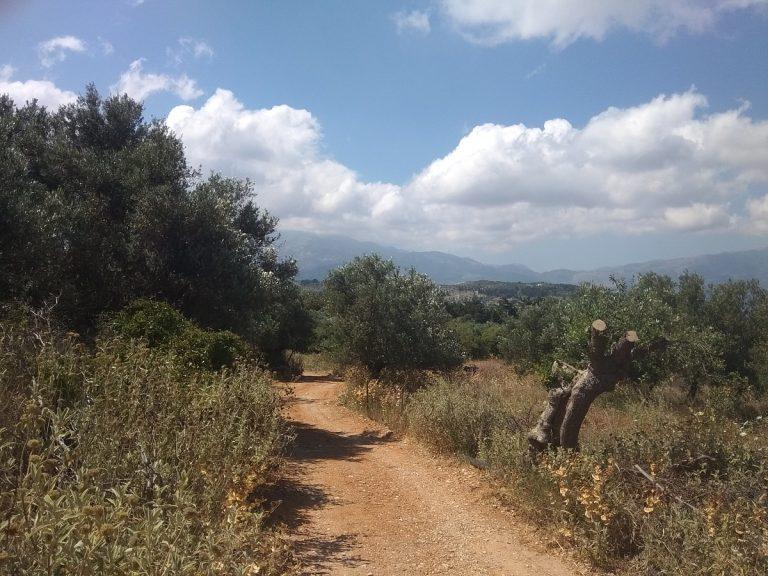 Plot of land in Apokoronas Chania Crete for sale0013