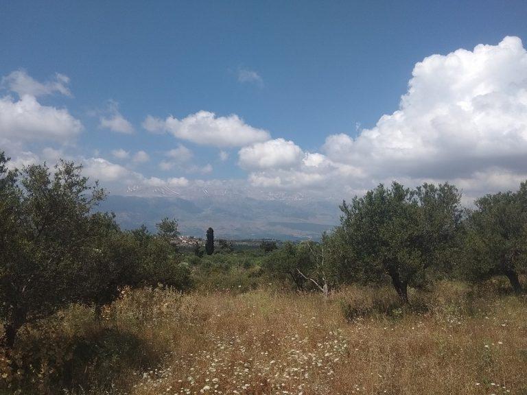 Plot of land in Apokoronas Chania Crete for sale0019