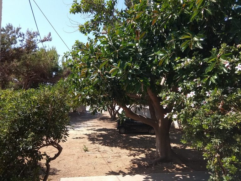 house for sale in chania kolymbari olive trees