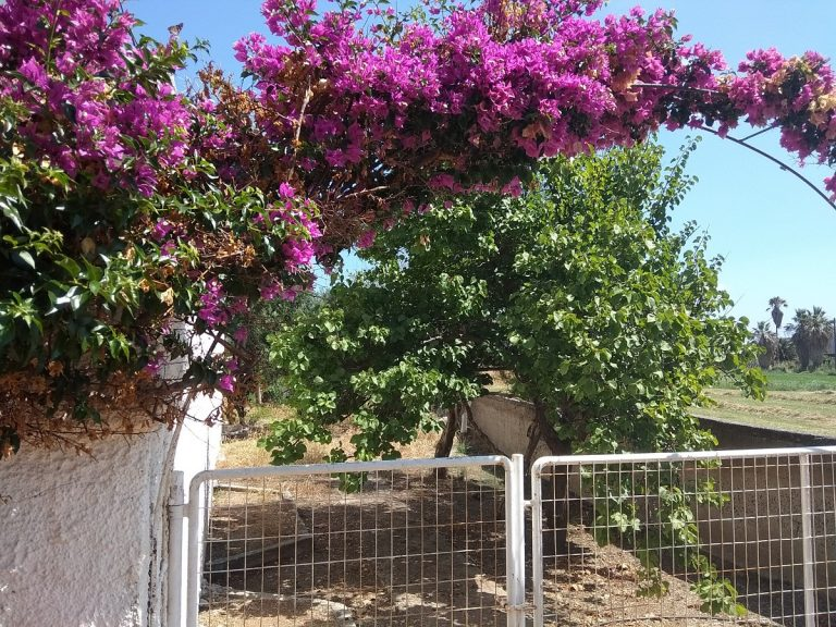 house for sale in chania kolymbari flowers