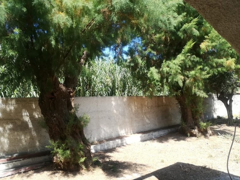 house for sale in chania kolymbari trees