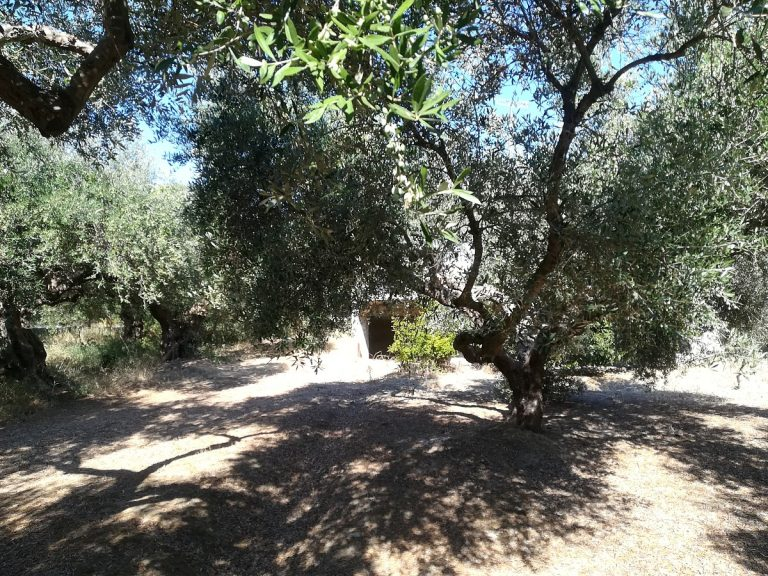 house for sale in chania olive grove