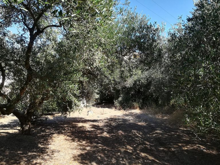 house for sale in chania crete olive trees