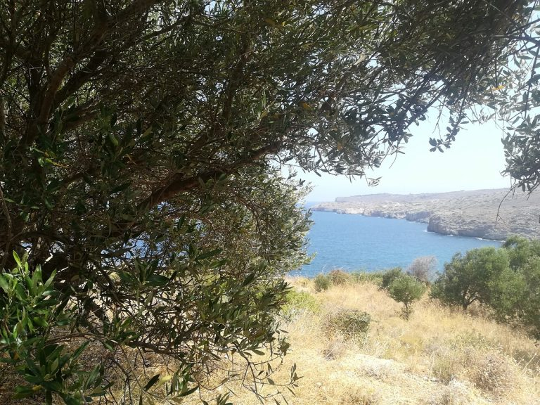 plot of land with sea view for sale in chania olive tree