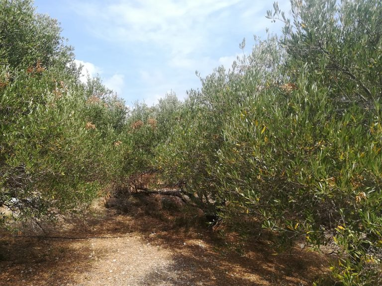 plot of land with sea view in chania olive grove