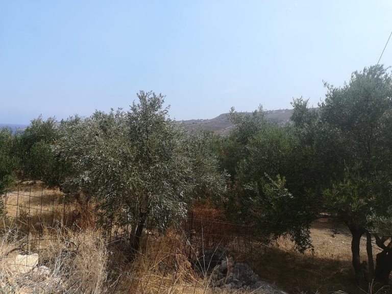 plot of land with sea view in chania olive trees