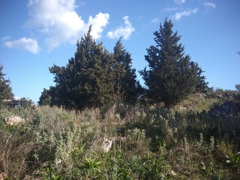 Investment project for sale in Apokoronas Chania Crete trees KH123