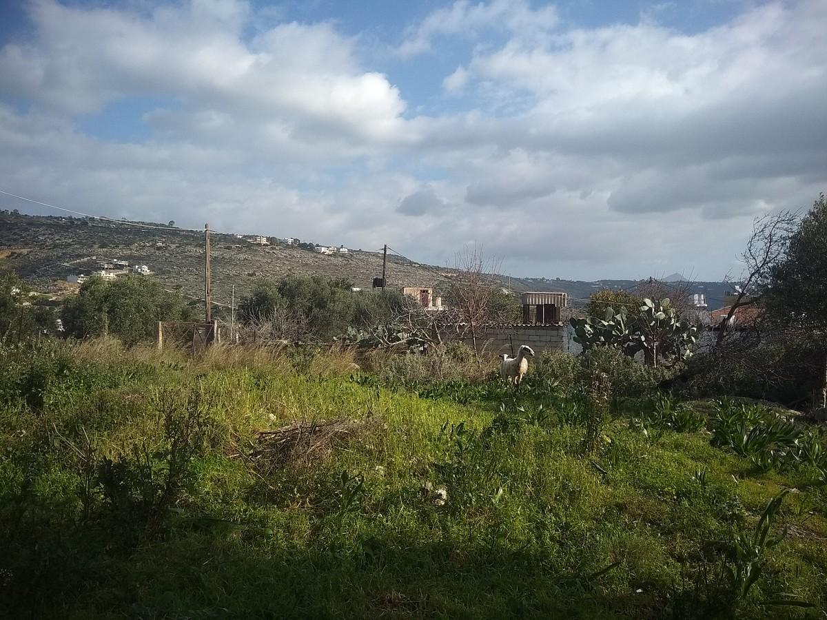 Plot of land in Chania Crete for sale in nature al255