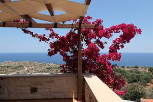 Stone villa for sale in Apokoronas Chania Crete garden detail KH128