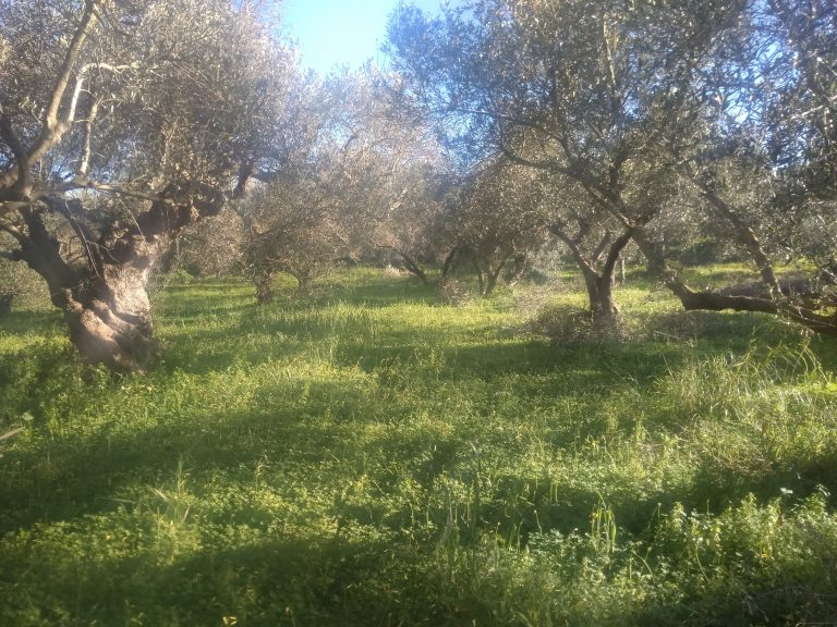 house for renovation for sale in kolymbari chania ch133 the plot