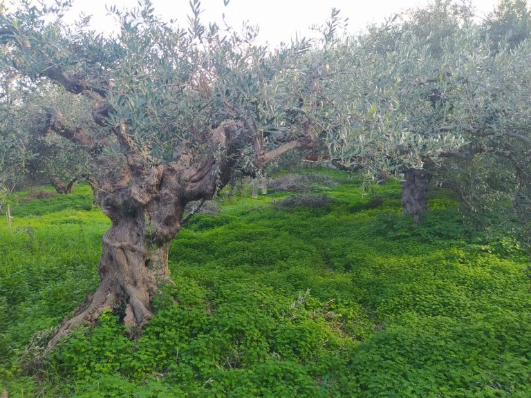 house for sale in kolymbari chania ch134 olive grove