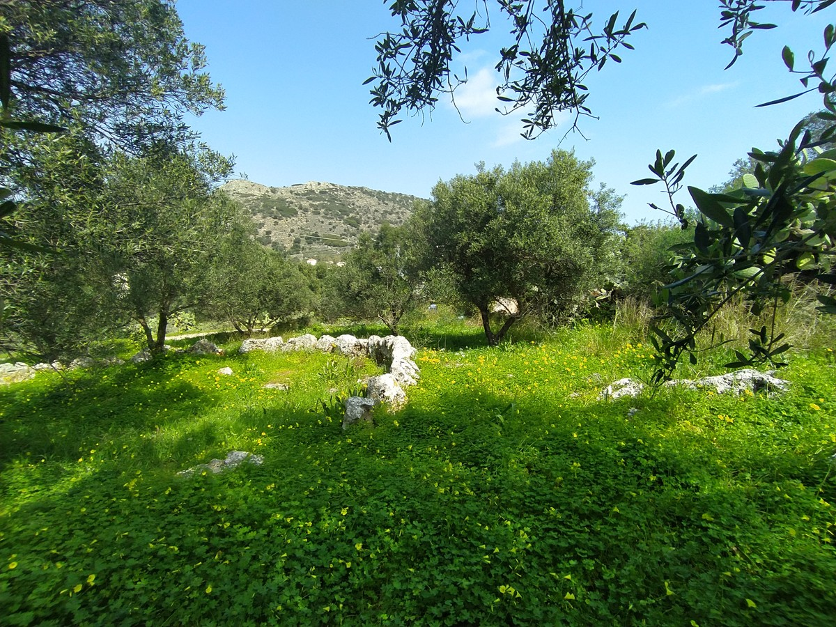land for sale in apokoronas kl446 olive trees